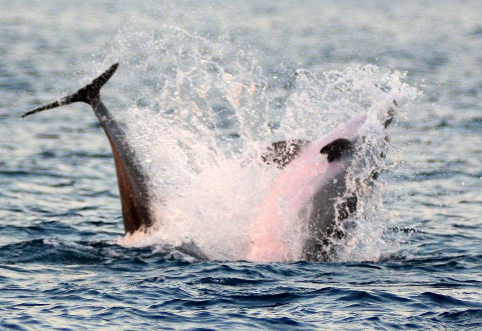 dolphin show-R.jpg