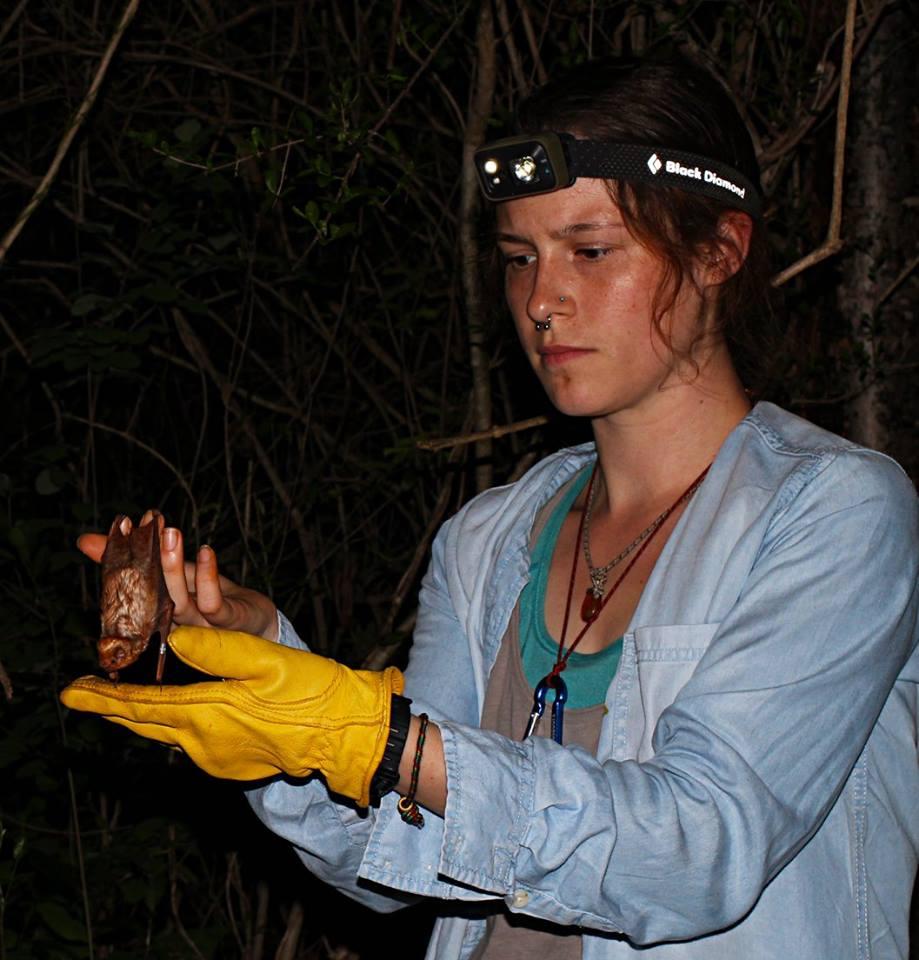 Volunteers checking the biometrics of a bat.