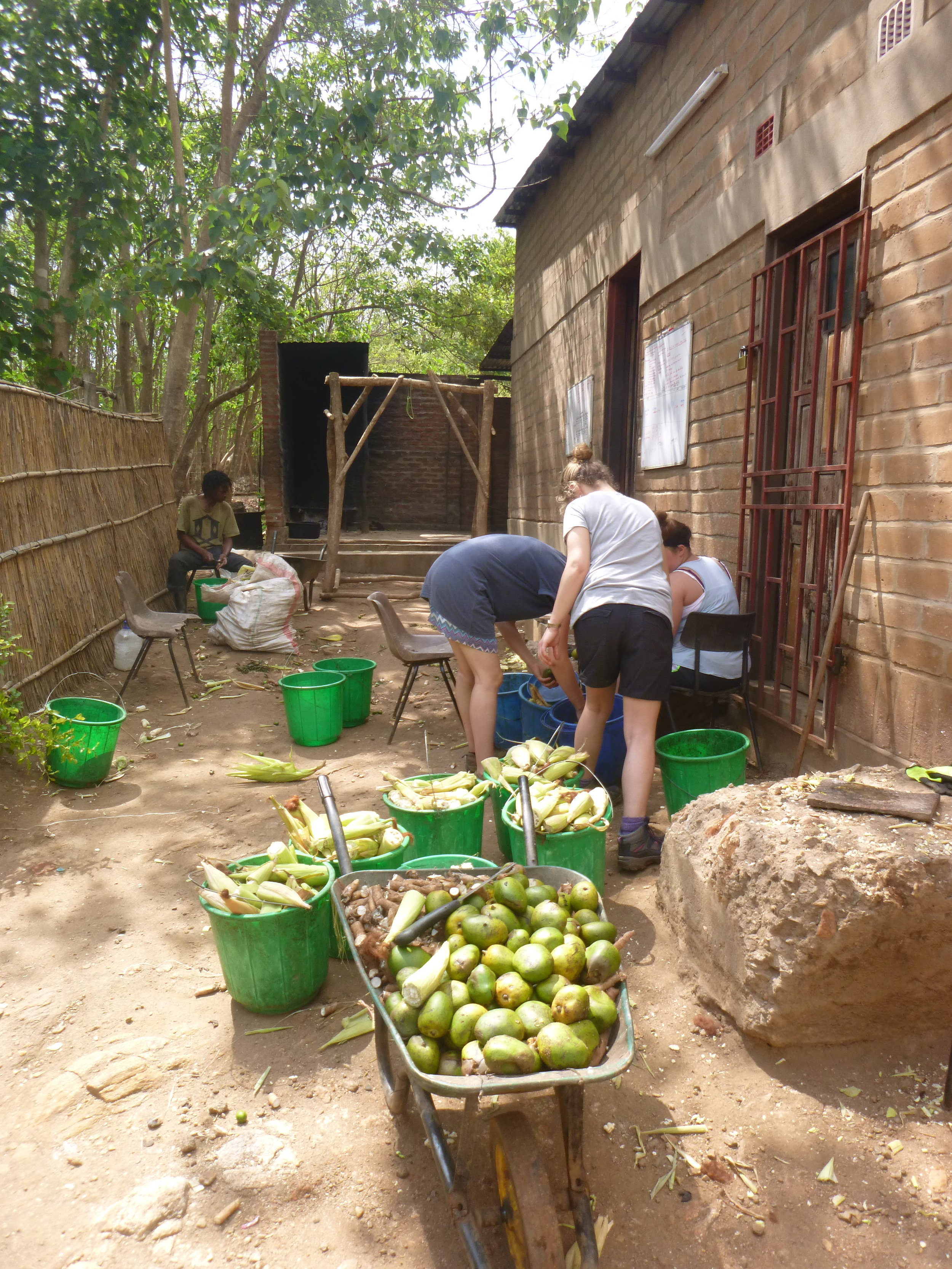 Volunteers cut fruit and vegetables for baboon feeding.