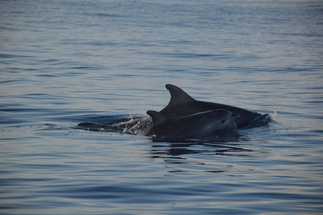 baby dolphin.jpg