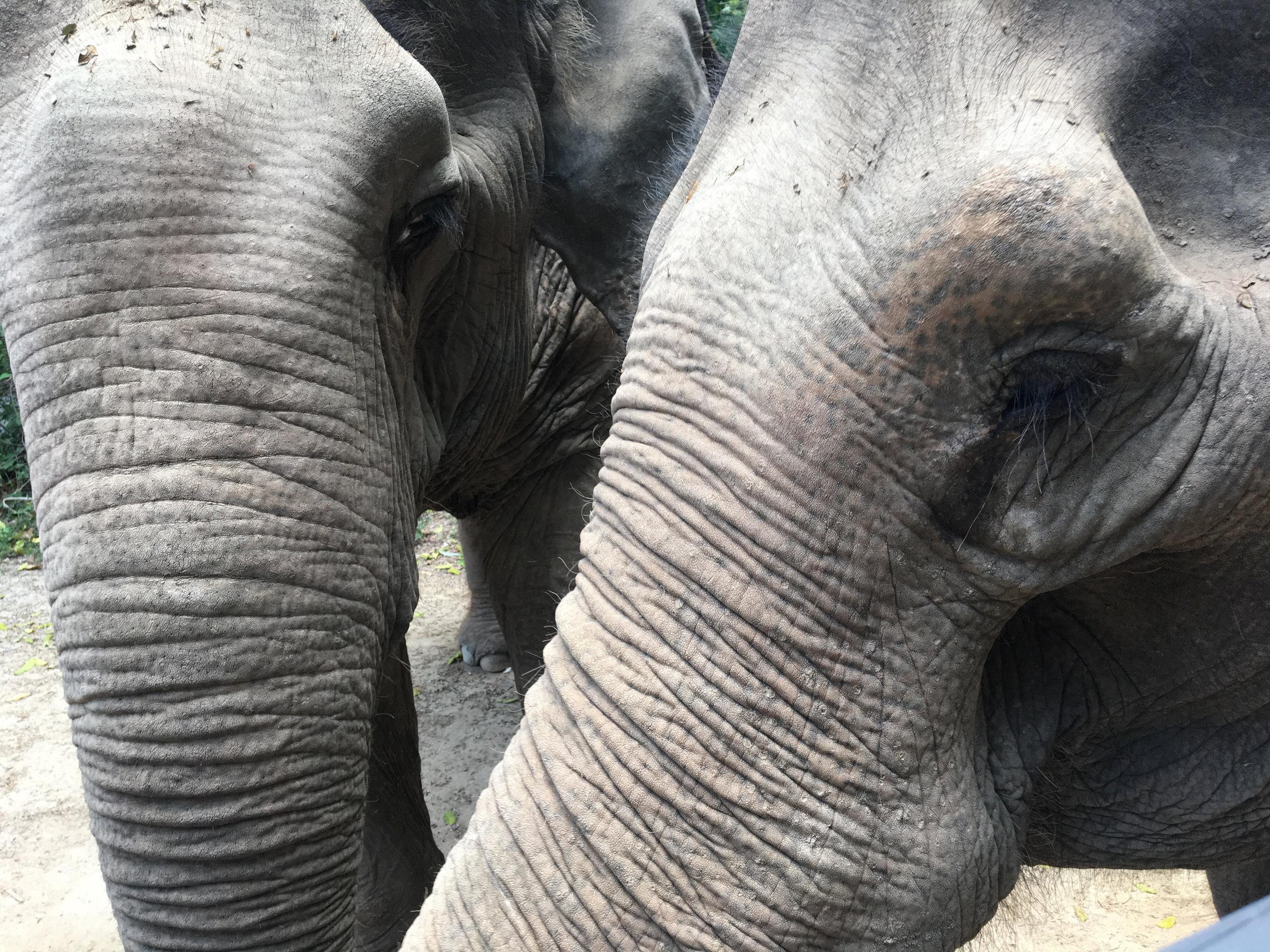 elephant 2018.jpg