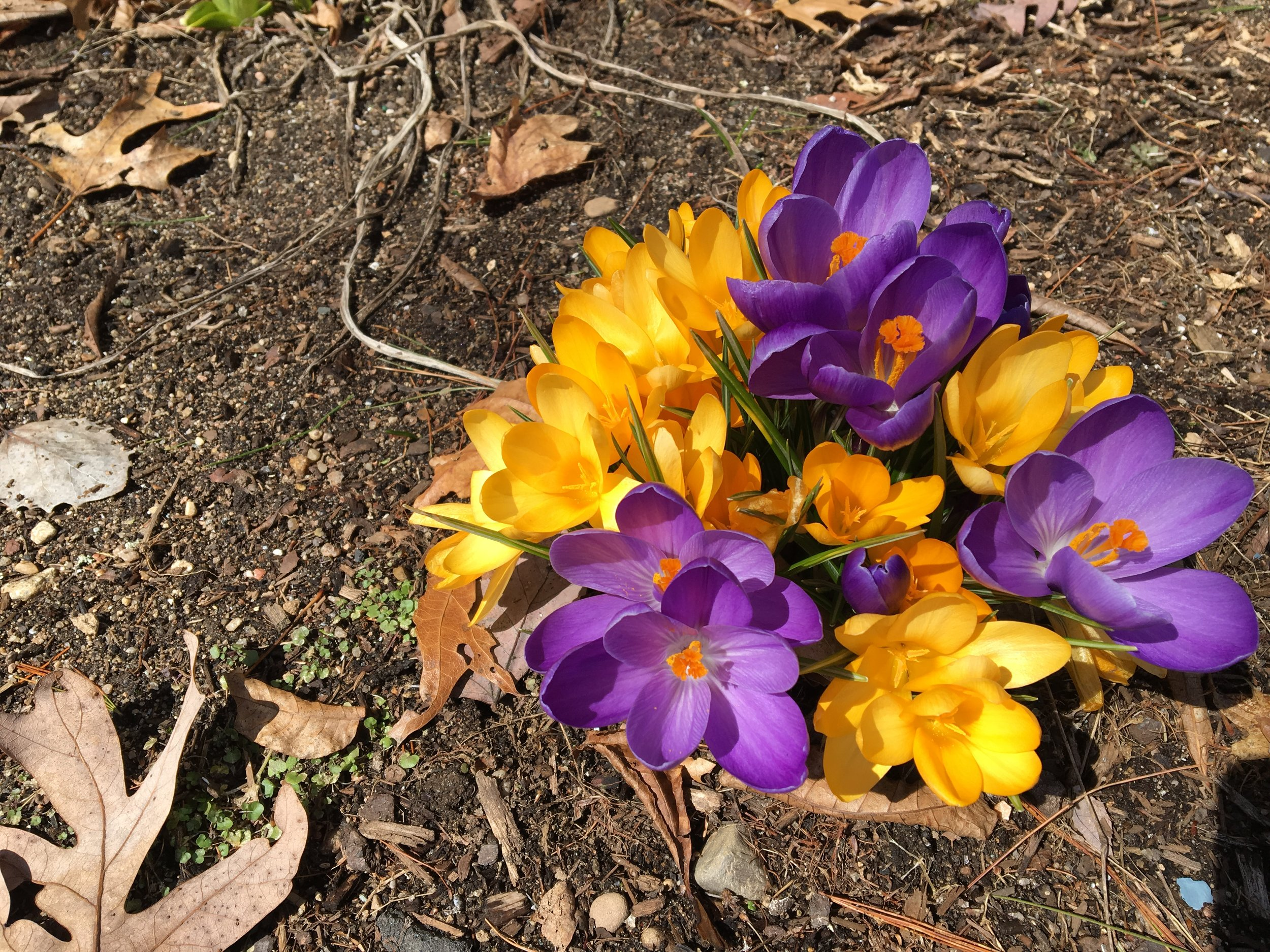 Flowers 3-30-17.JPG