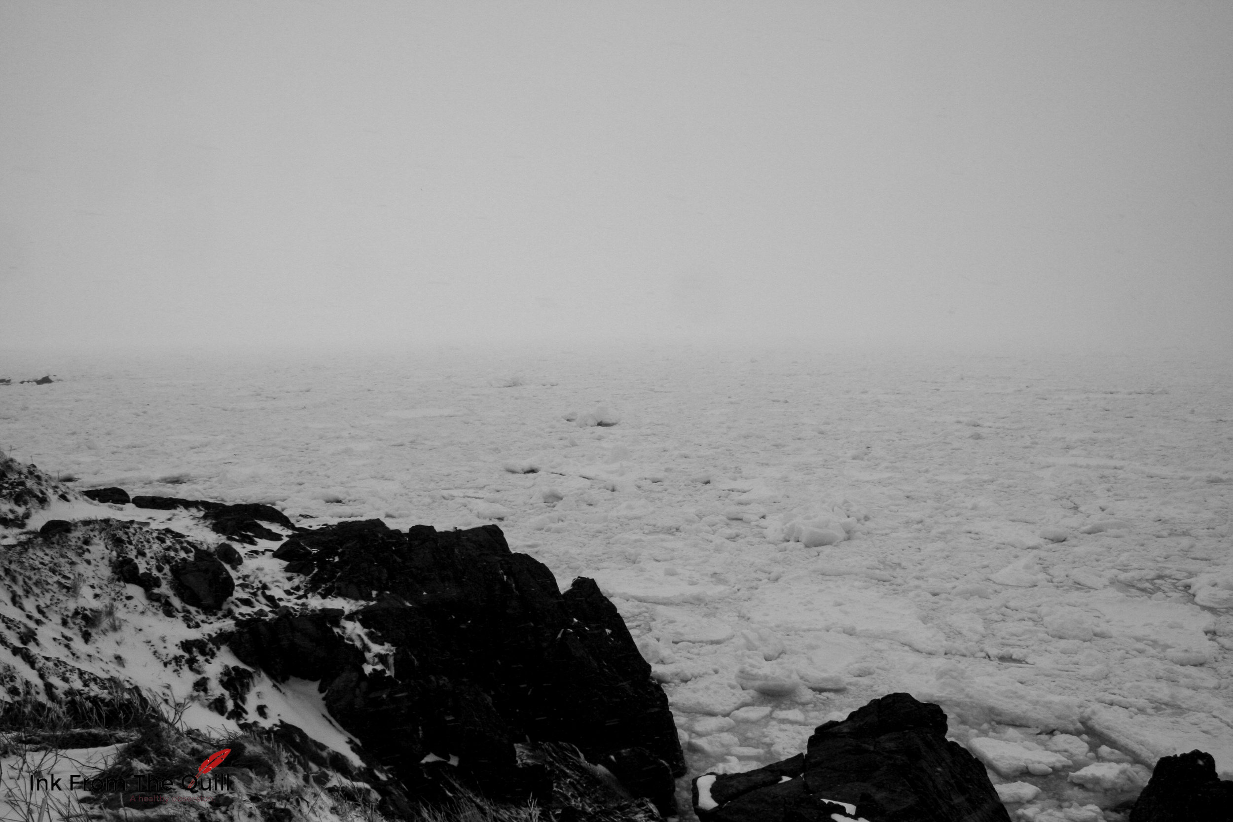 Sea ice in Portugal Cove, Newfoundland - All the black specks on the ice are Harp Seals