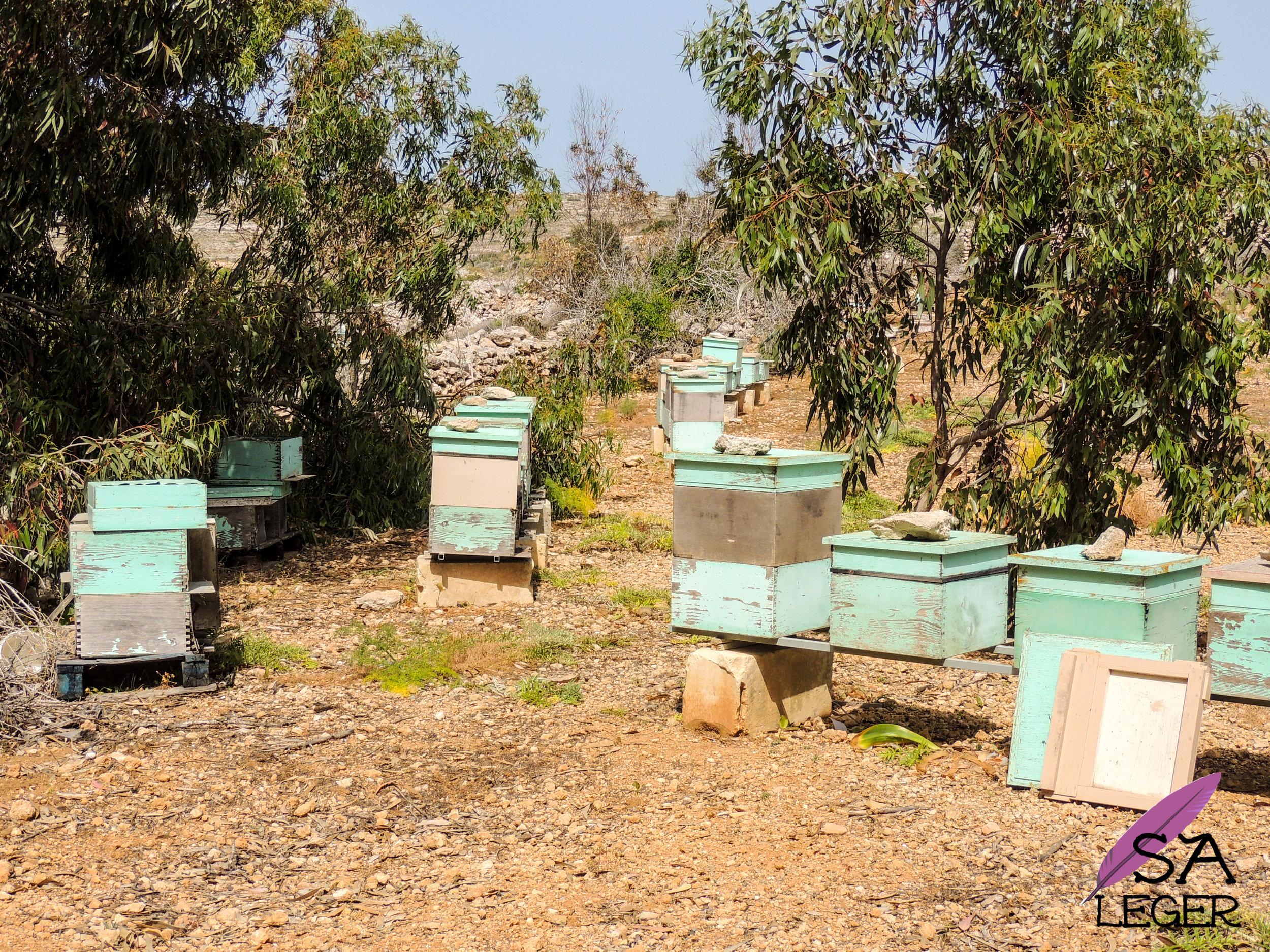 Apiary amongts olive trees - Comino, Malta