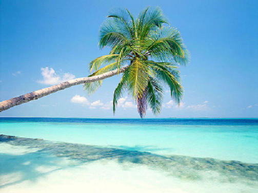 Palm Trees Wallpapers 01_25%.png