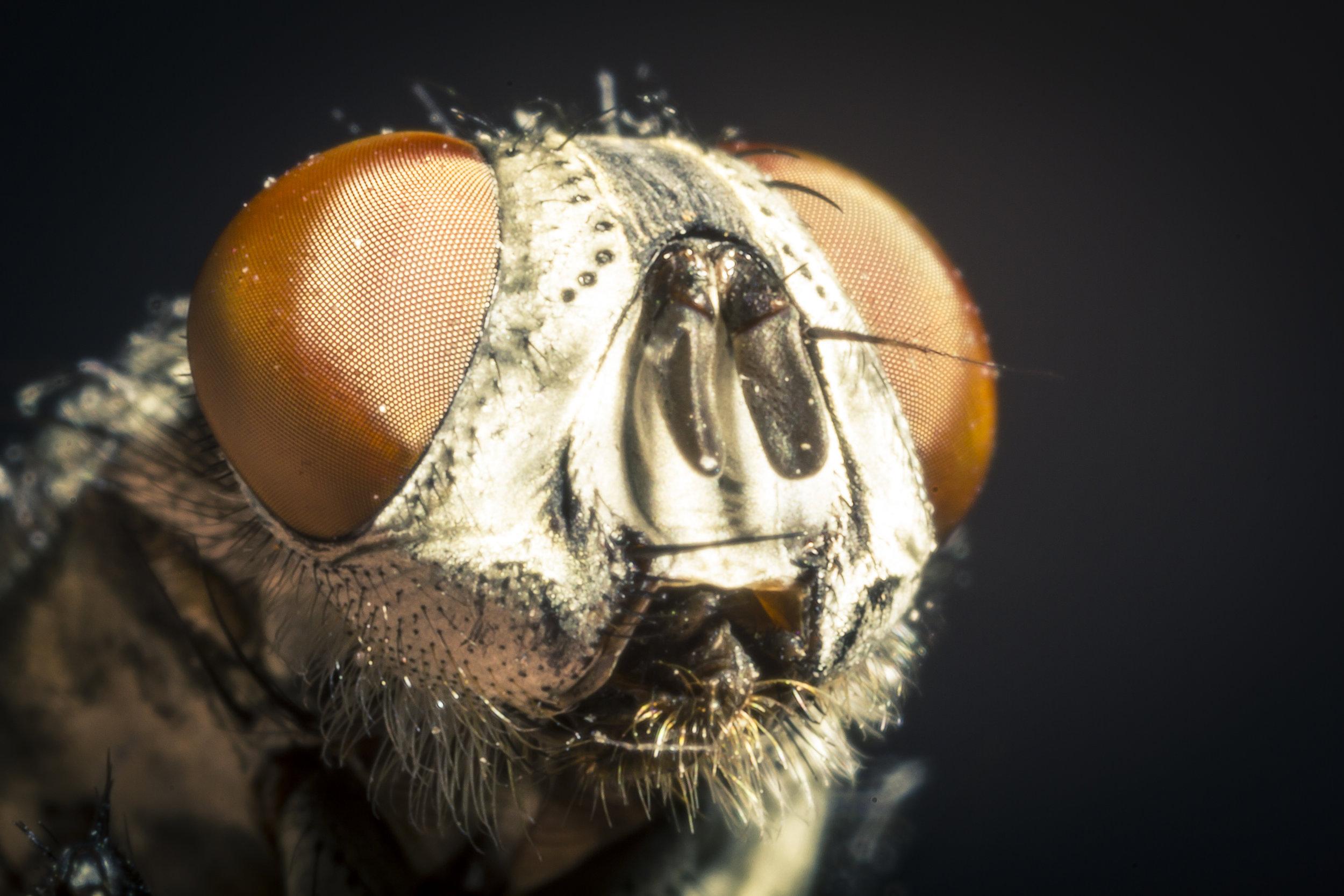 foto macro fotografo animali insetto
