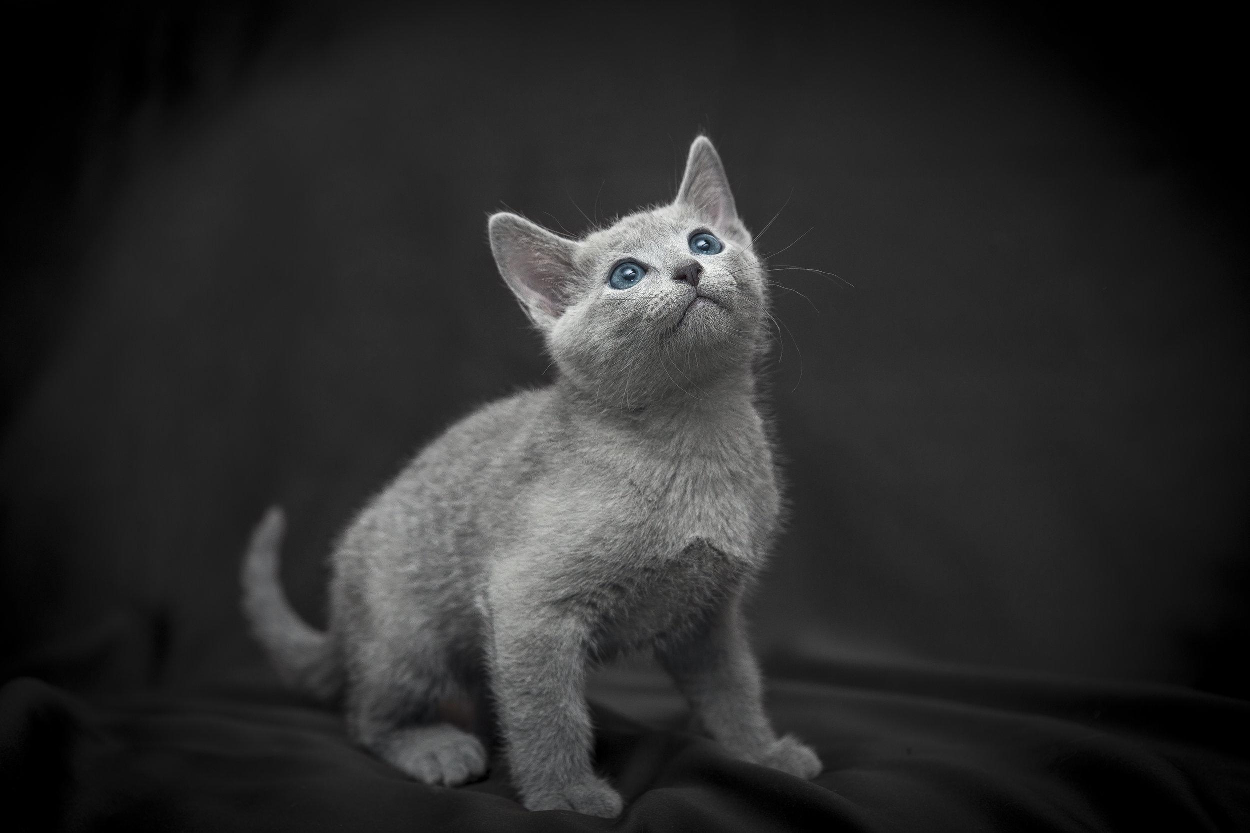 Foto di un gattino
