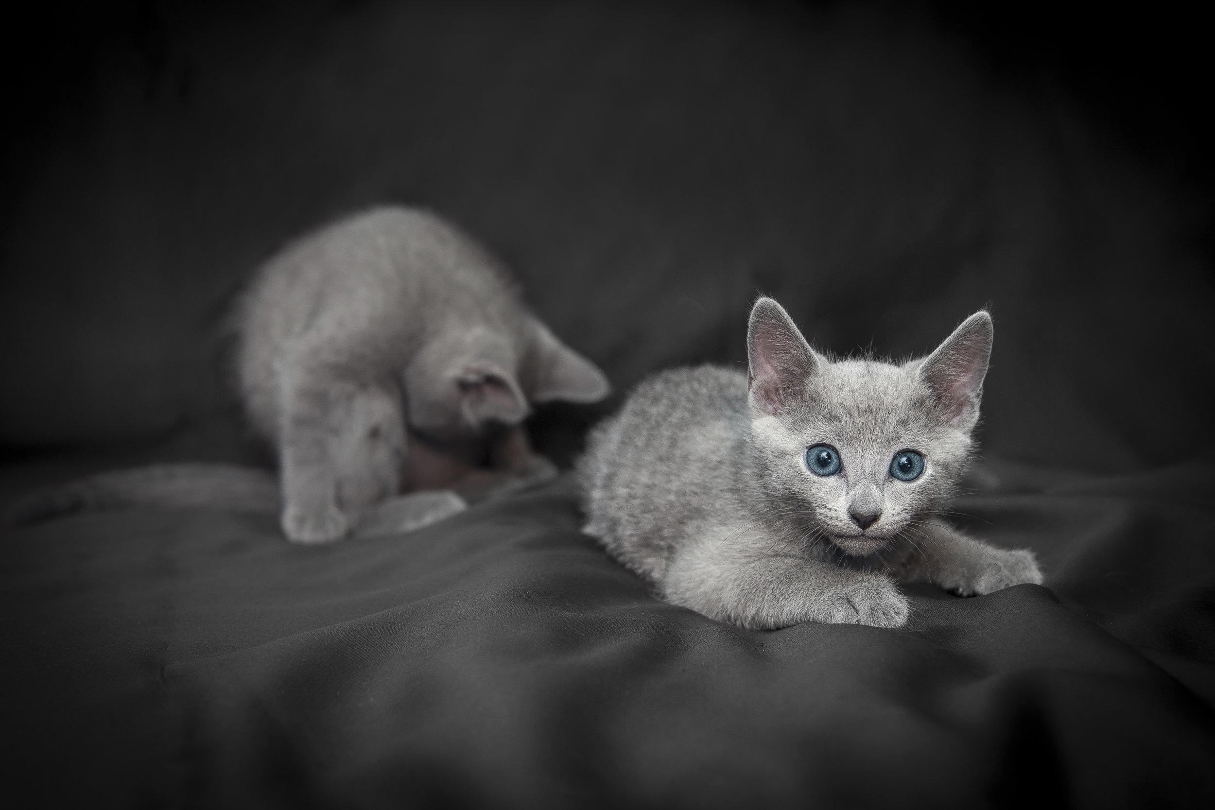 Famiglia di gatti