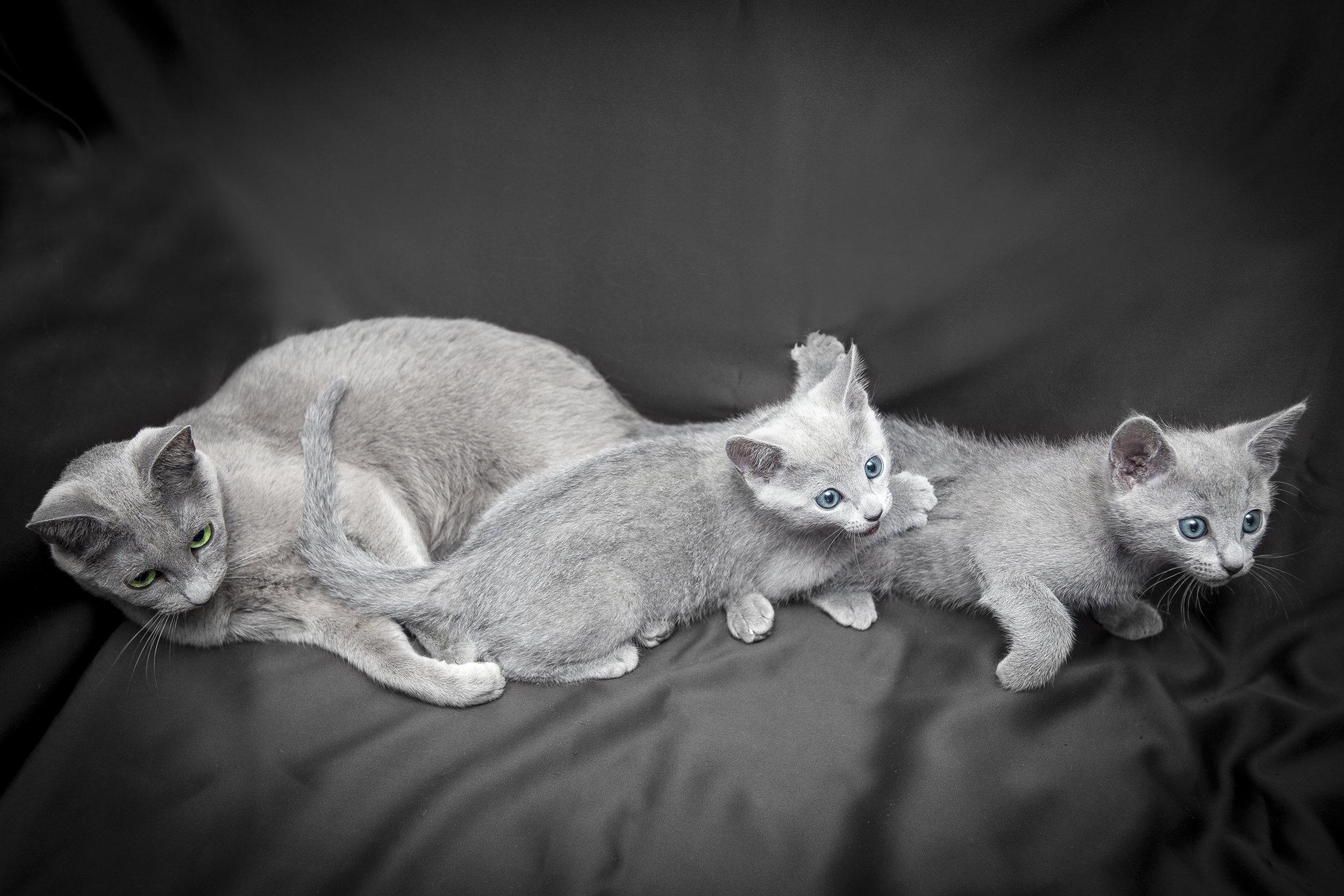 Una famiglia di gatti