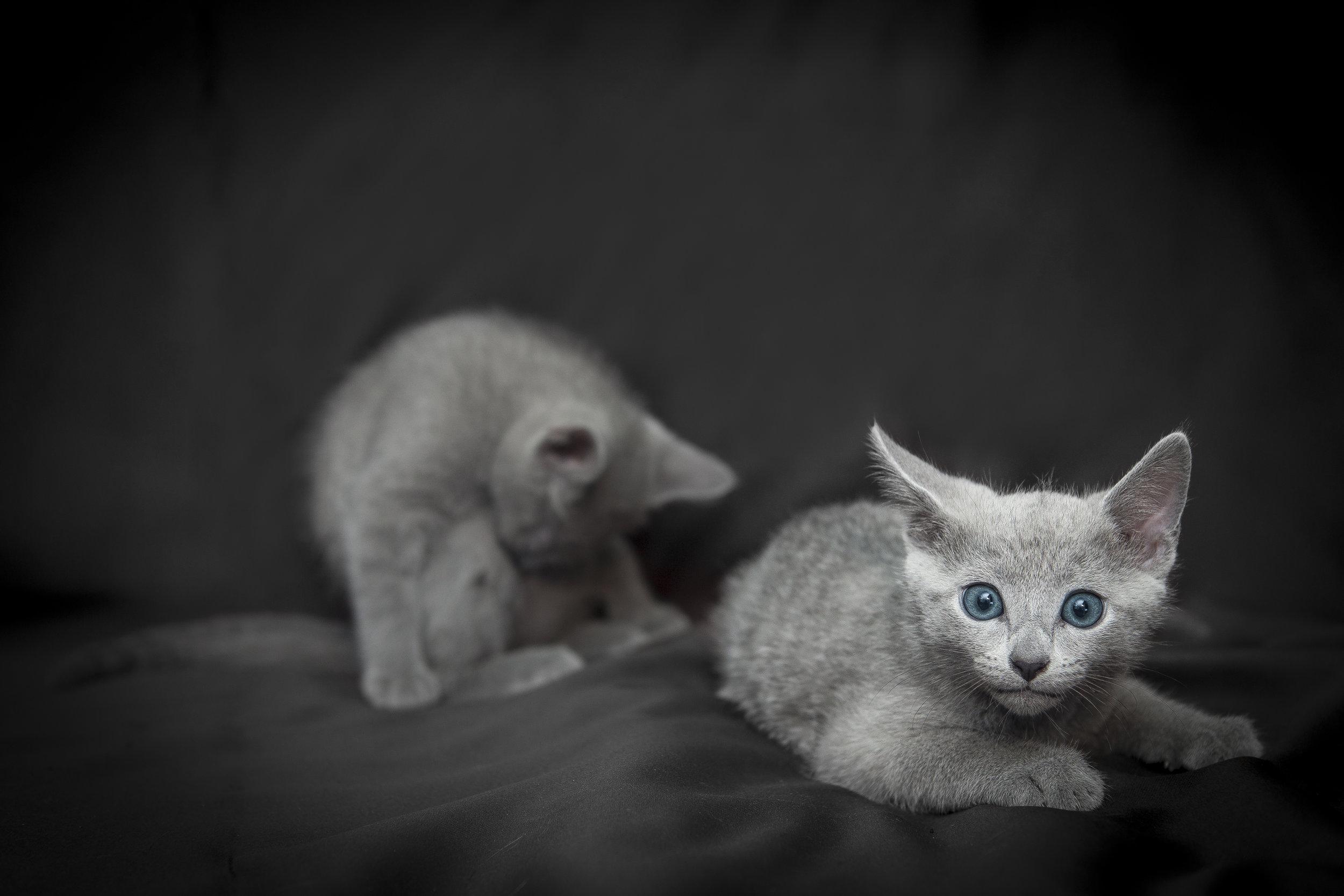 Ritratto di due fratellini