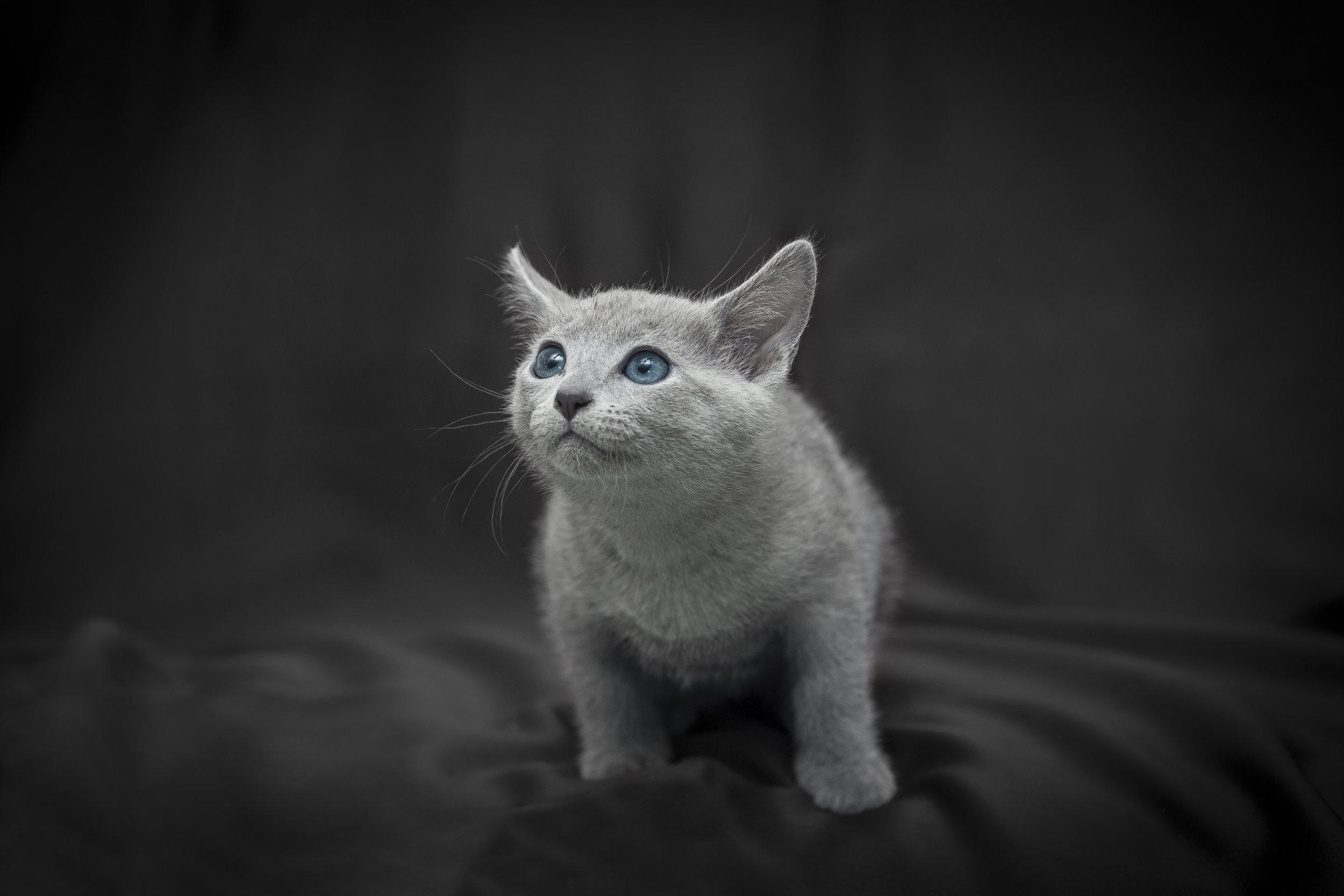 Ritratto di un gattino che gioca