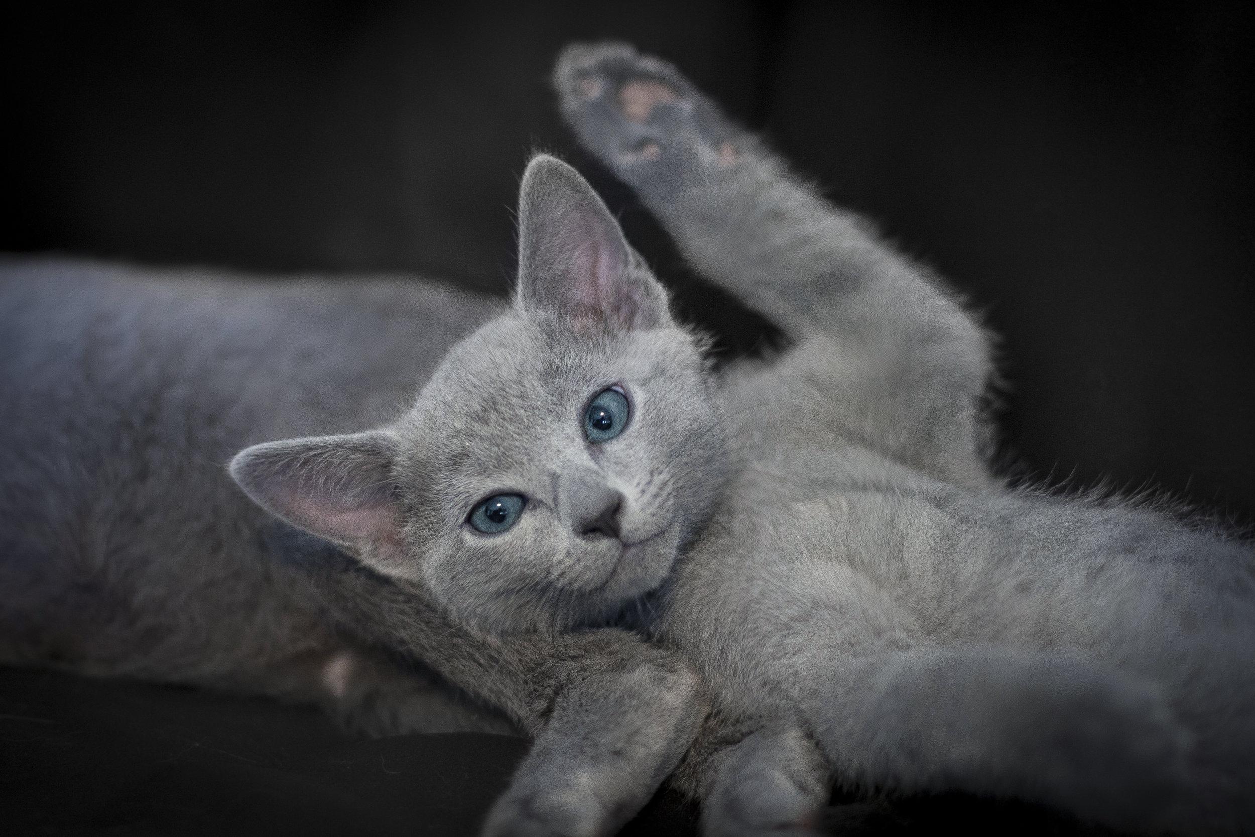 Foto gatto giocherellone