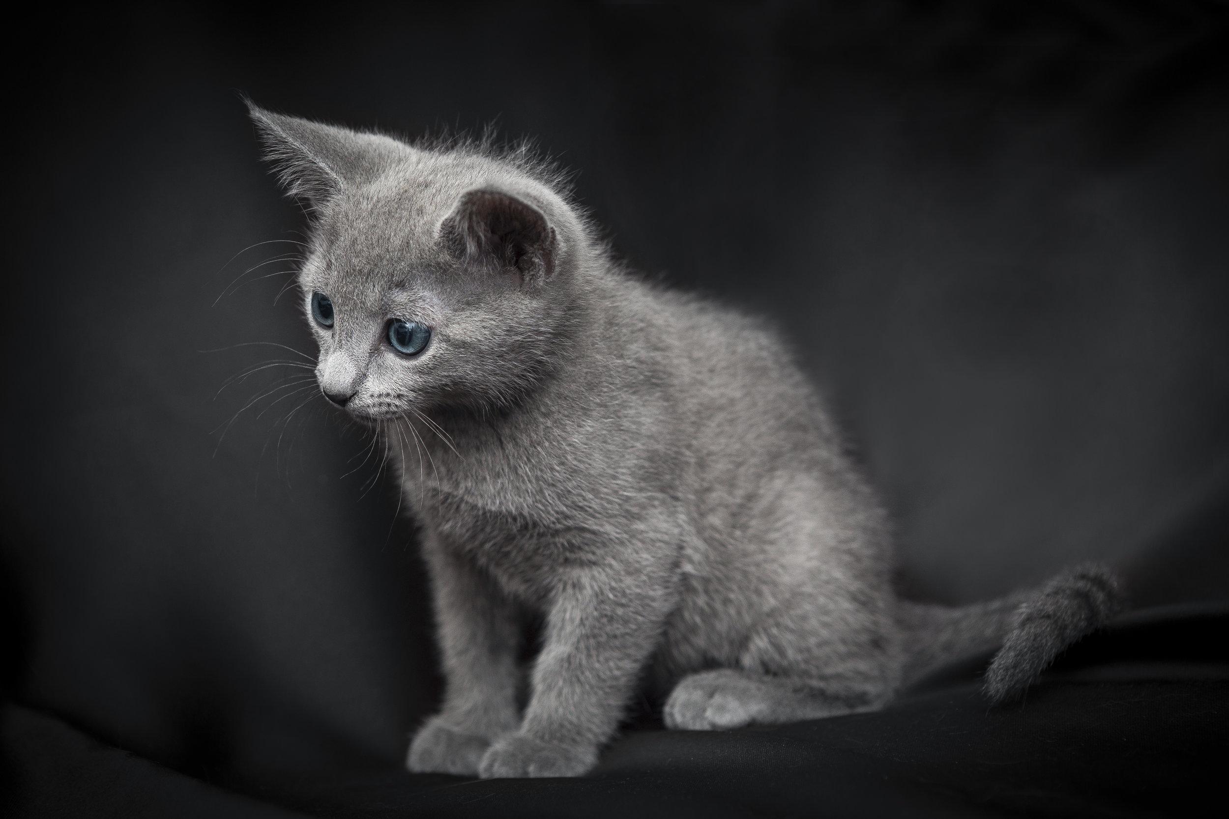 Gattino curioso ritratto con Canon EOS