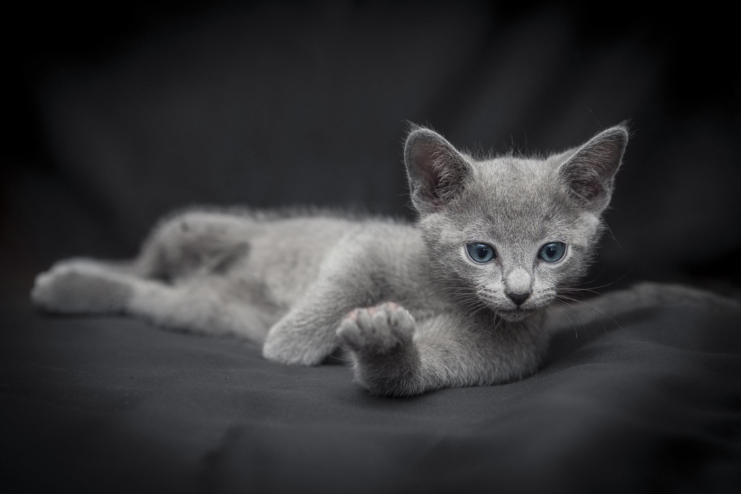 Foto di un micetto stanco