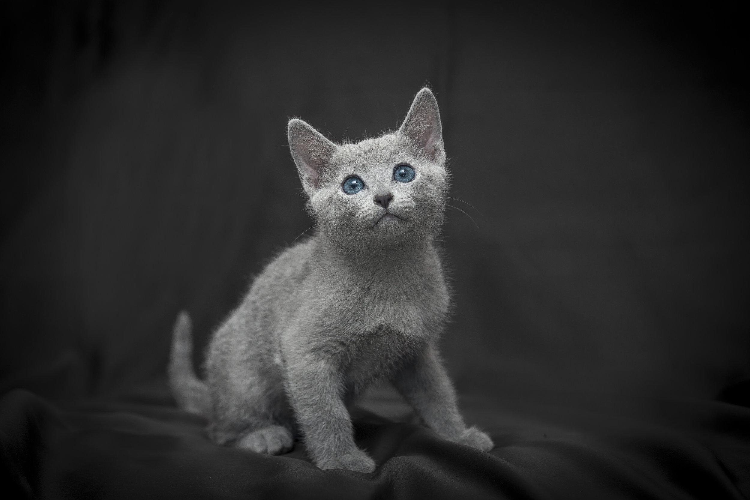 Fotografia di gatti