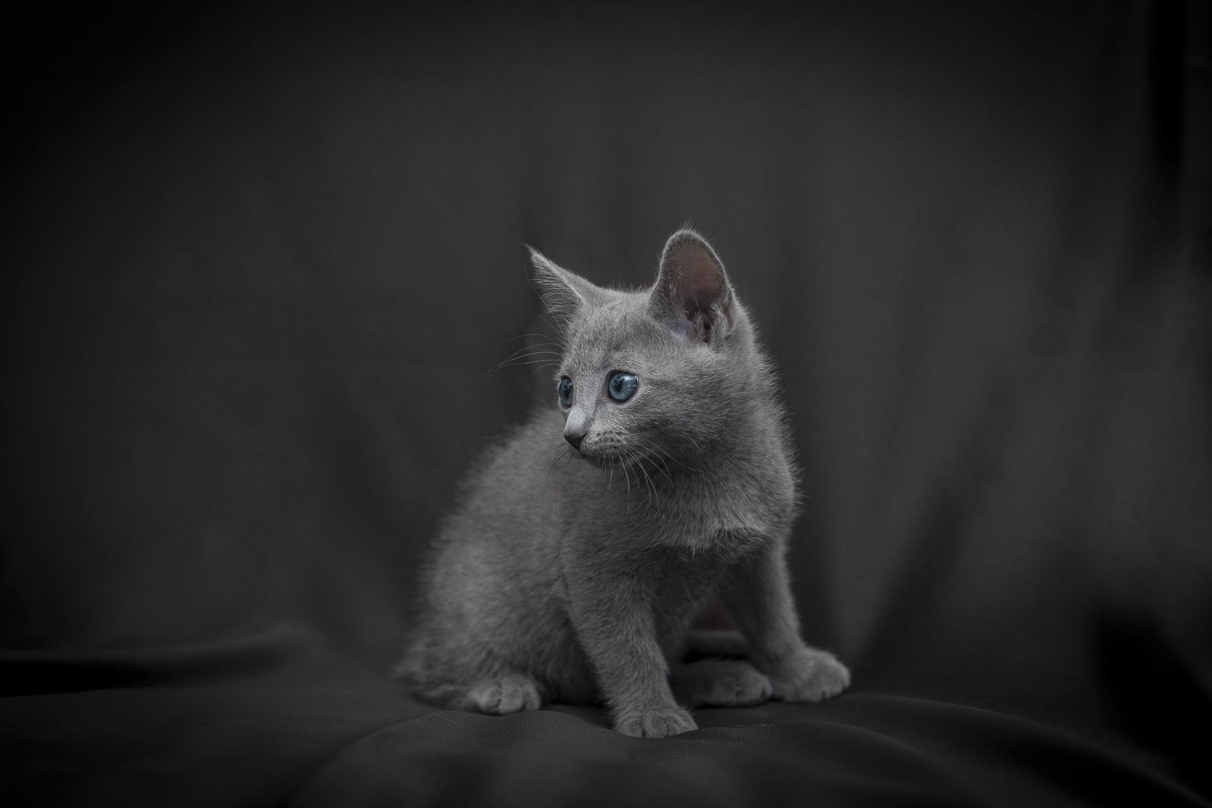 Adorabile gattino