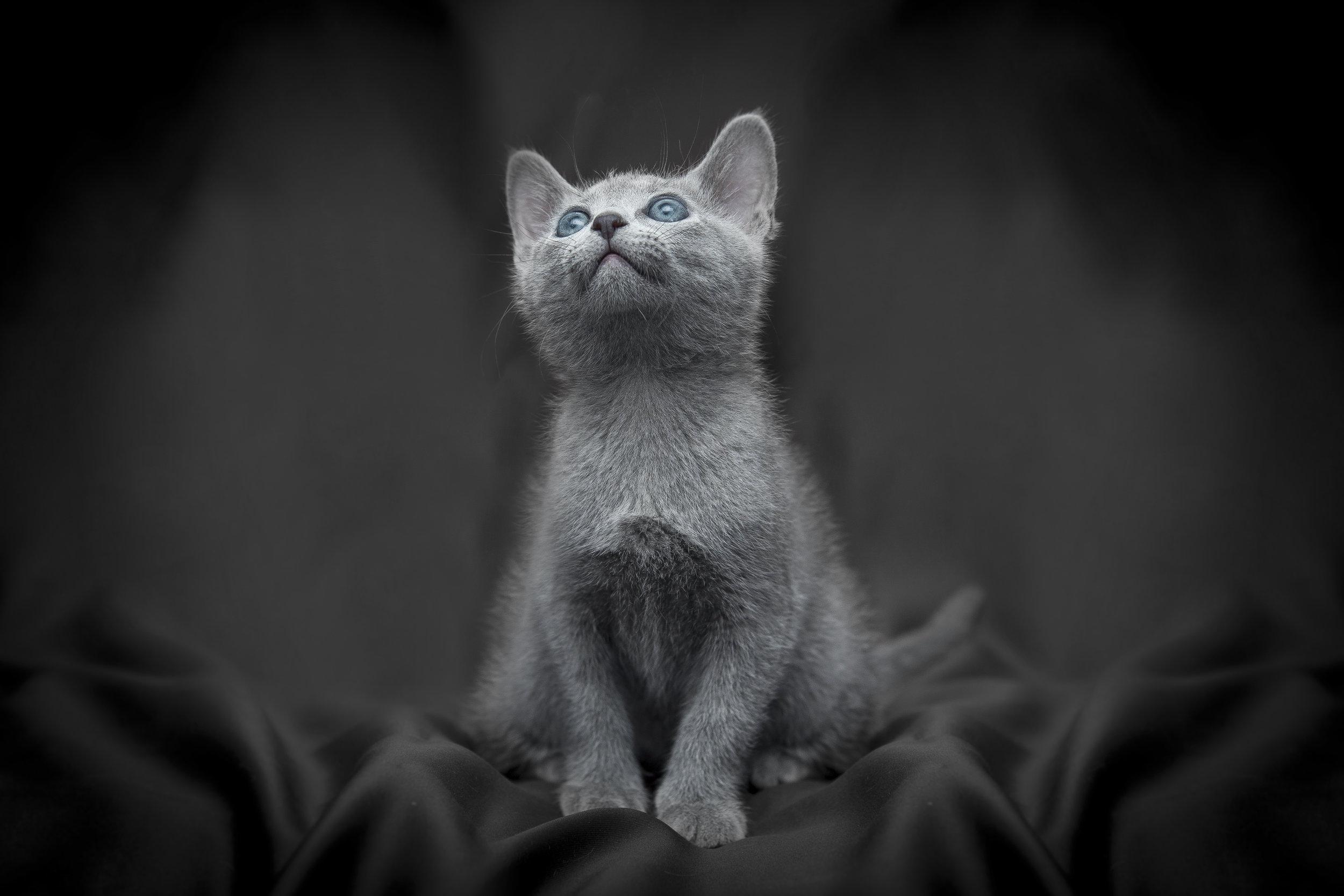 Ritratto di un cucciolo di gatto