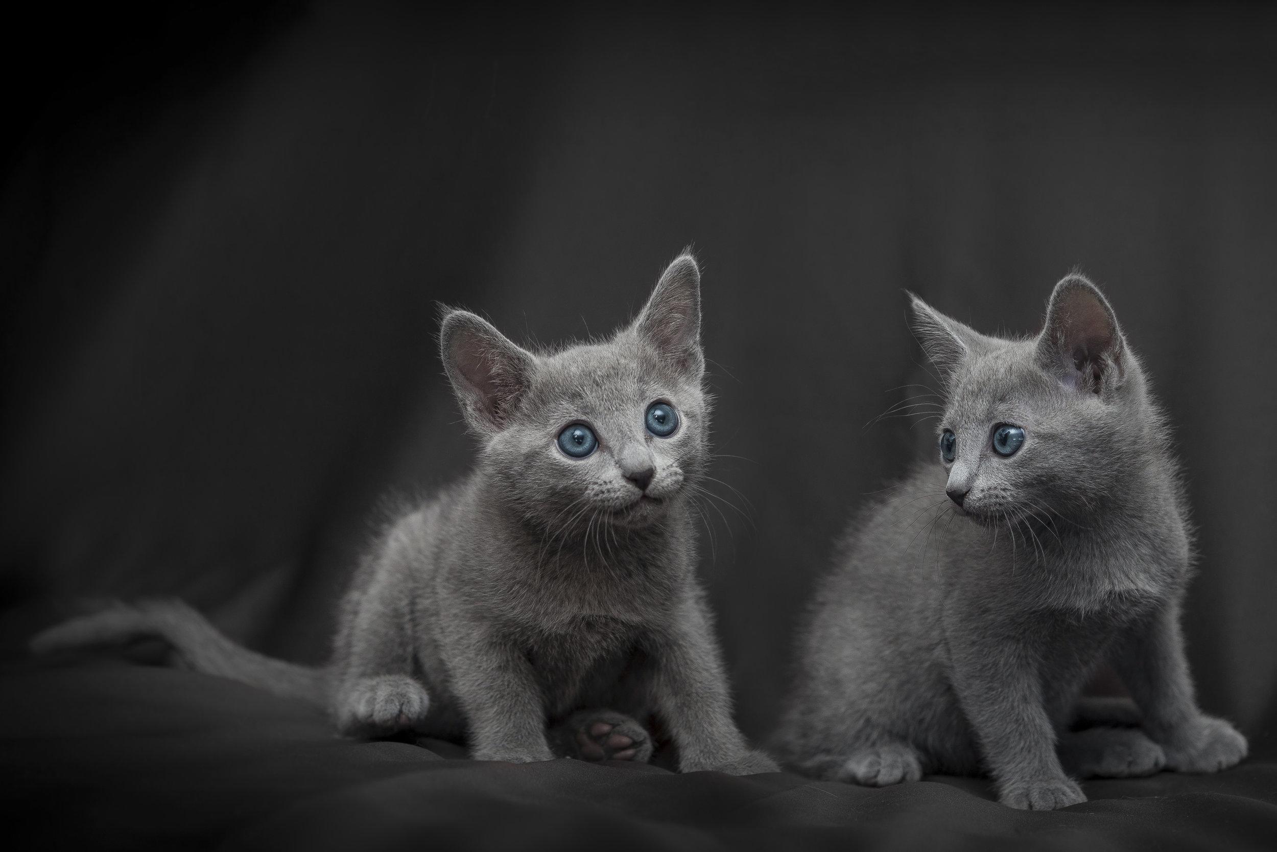 Foto di gattini con faccette buffe