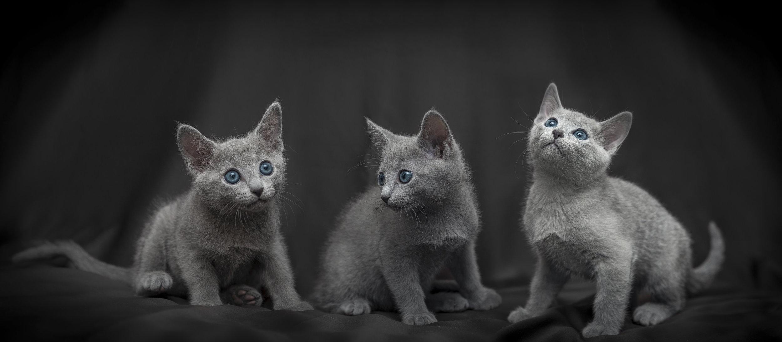 Tre fratellini