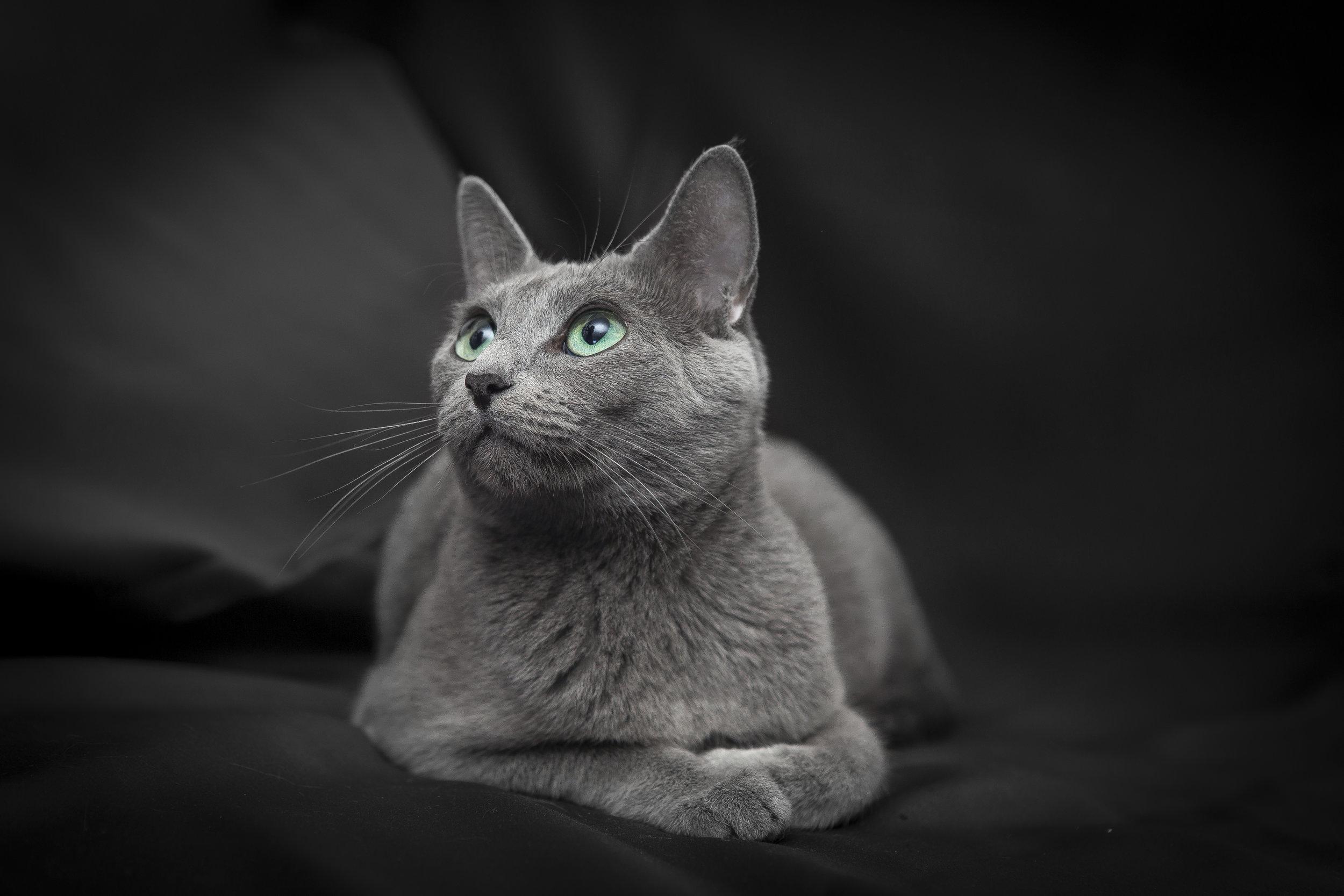 Ritratto a una gattina con occhi verdi