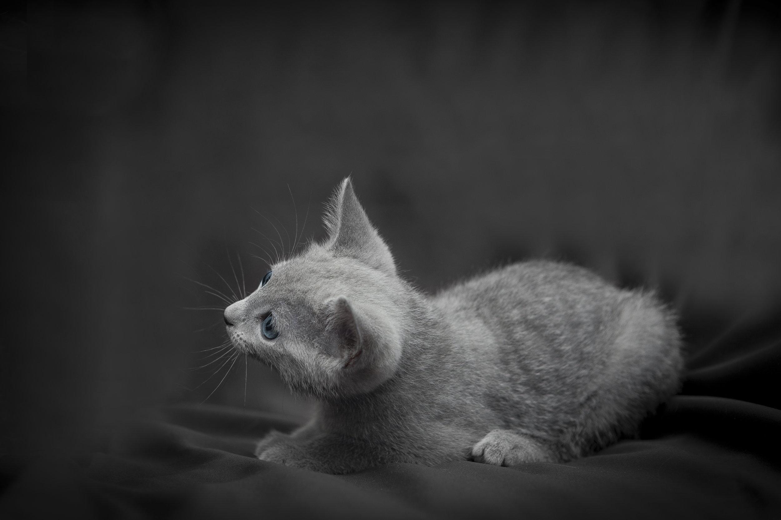 Foto a un gattino che gioca