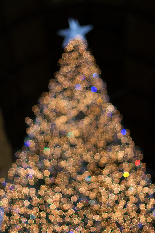 Foto di Natale, albero magico