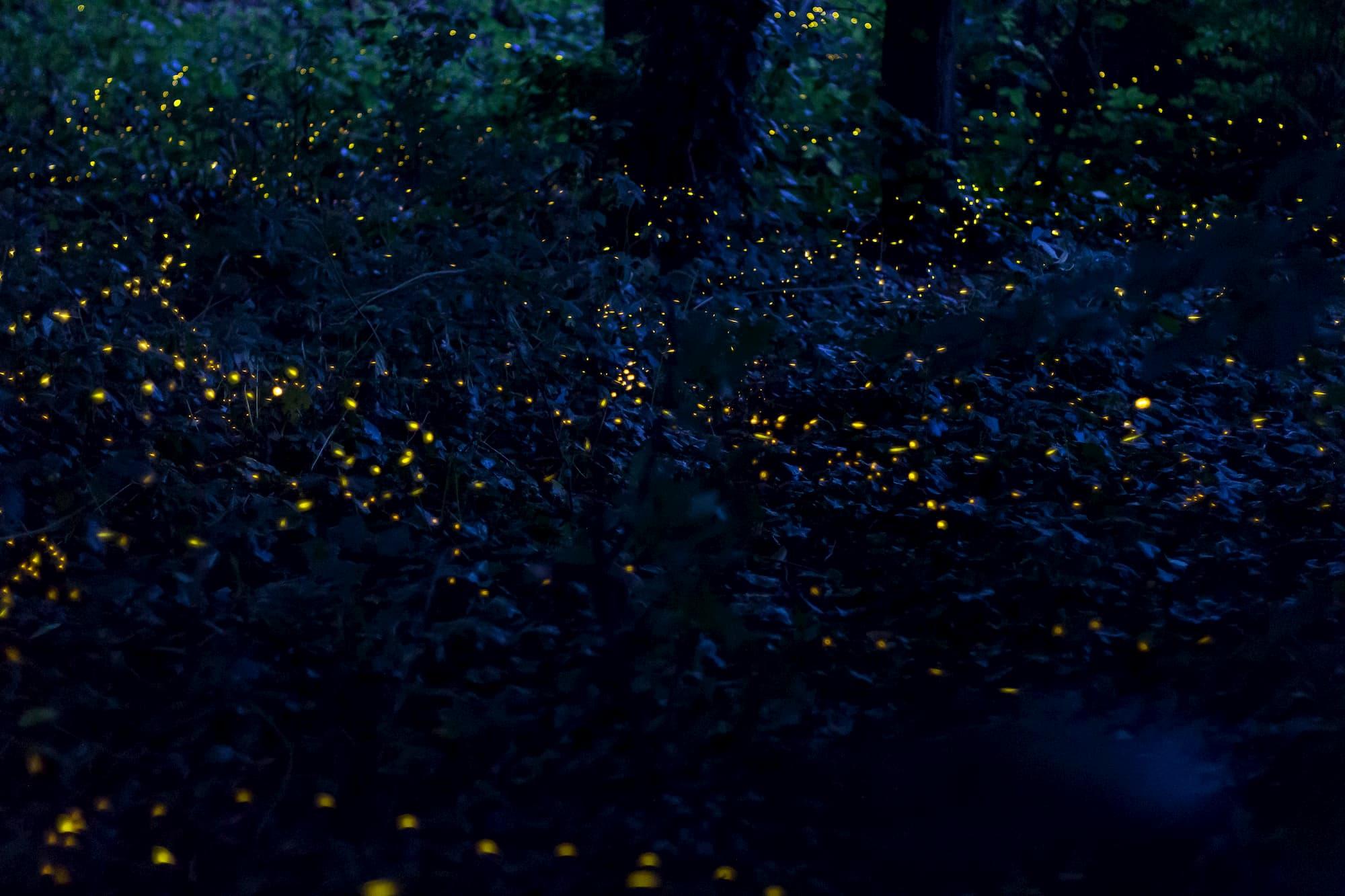 Foto alle lucciole