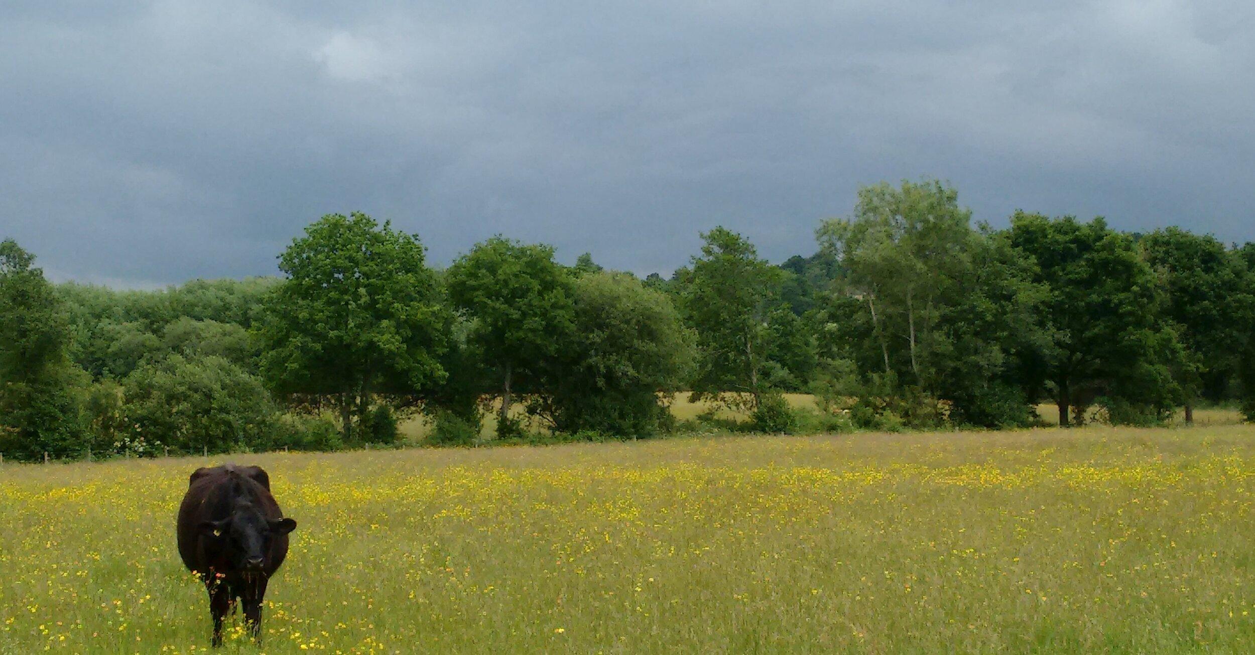 The Field of All Fields