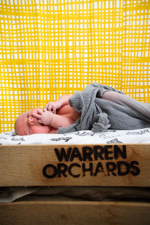 newborn-0665.JPG