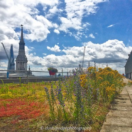 Wild-London-green-roof-images-4-450x450.jpg