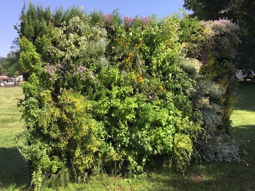 RHS Hampton Herb Living Wall