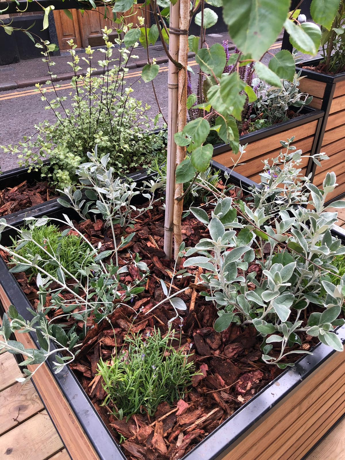 Planting at Rivington Street Parklet