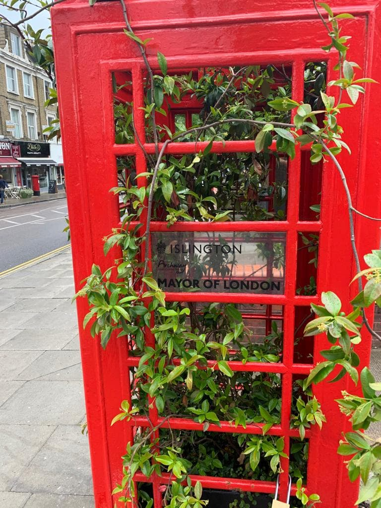 Thriving plants inside telephone box