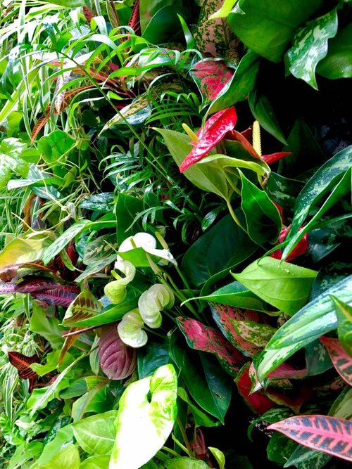 Meristem Design living wall planting