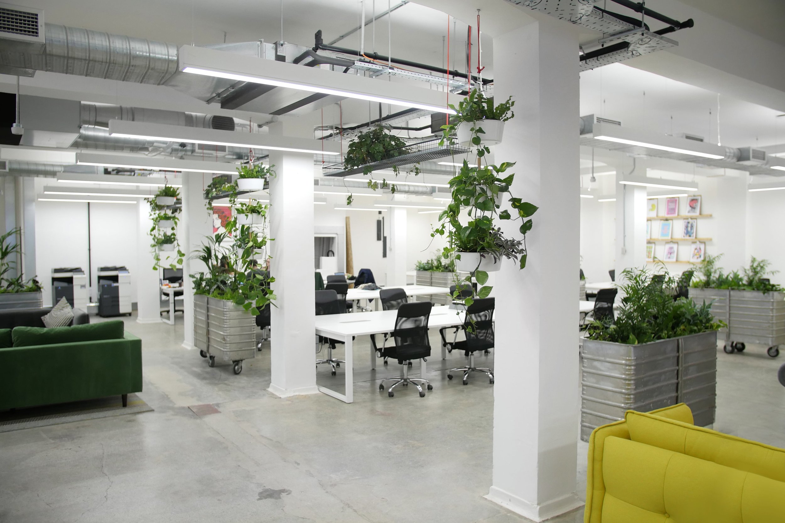 Biophilic office from Meristem Design