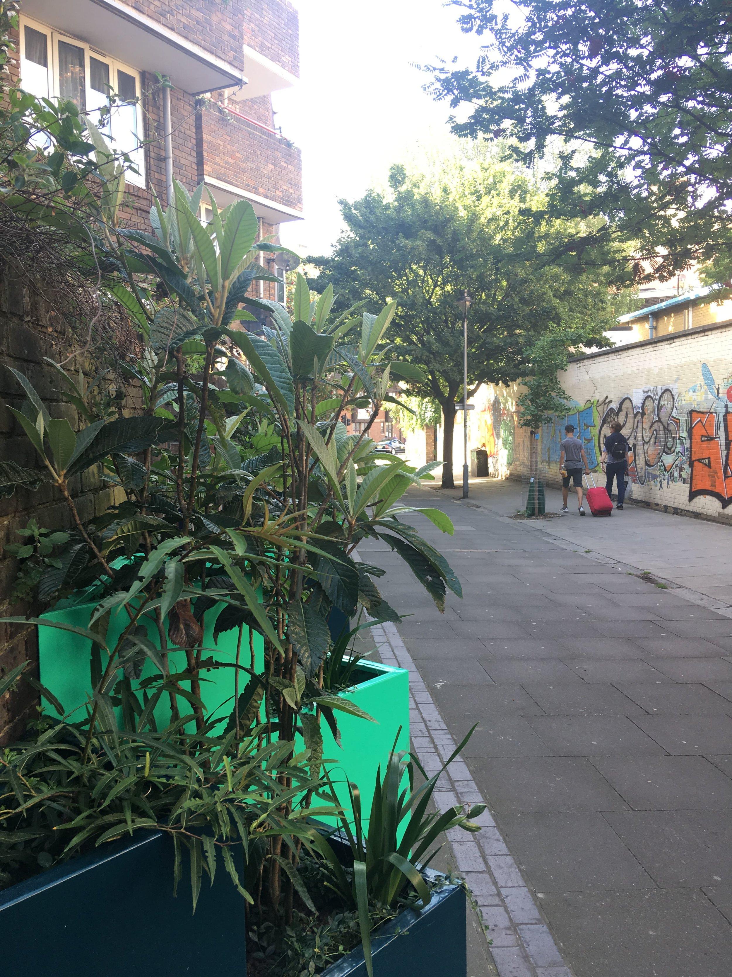 North Gower Street planters