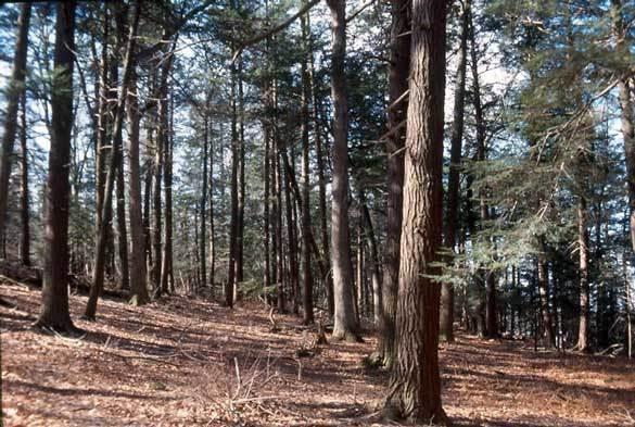 Hemlock Ridge and Ravine, Blairstown NJ