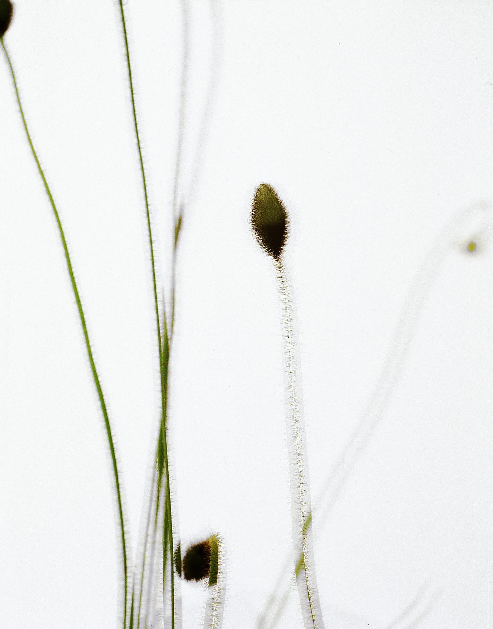 PARFUM_tiges©AudeSIRVAIN.jpg