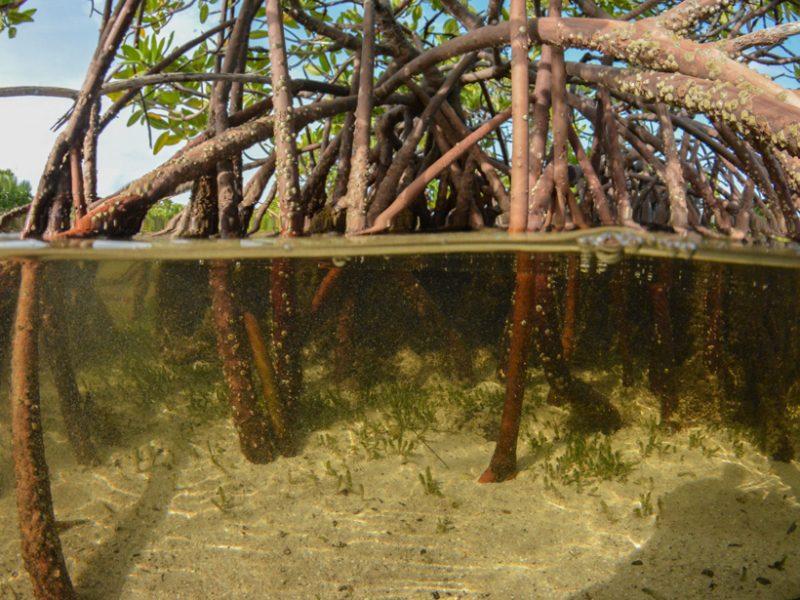Study Finds That Coastal Wetlands Excel at Storing Carbon