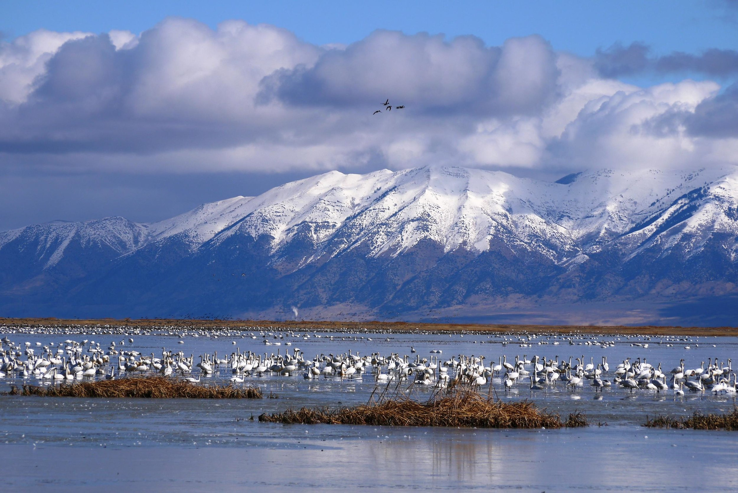 Utah's Great Salt Lake has lost half its water, thanks to thirsty humans