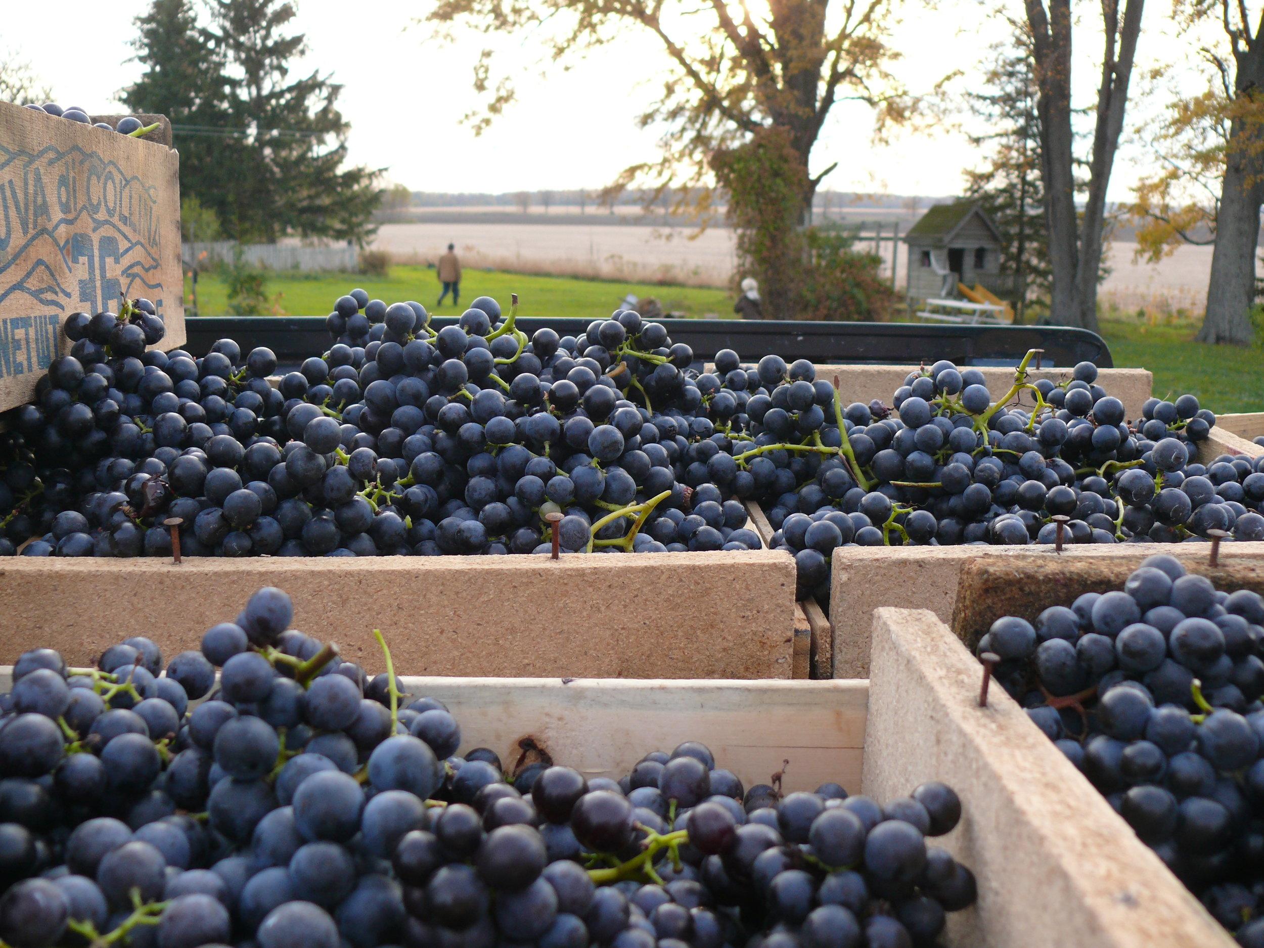 2017-04-20 Alton Estate Winery.jpg