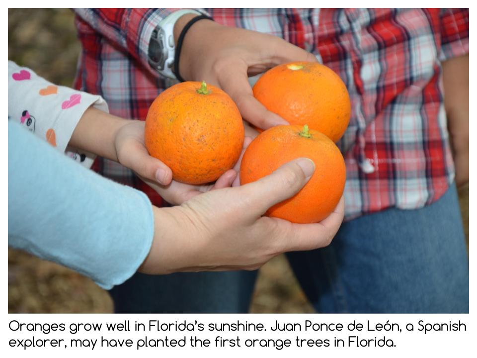Florida Presentation (12).png