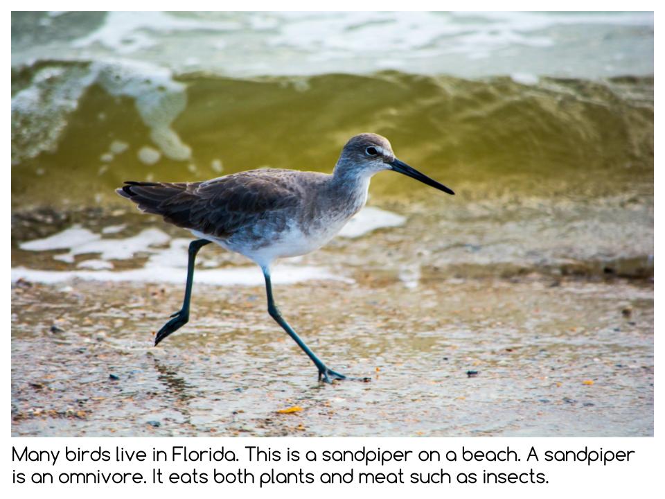 Florida Presentation (4).png