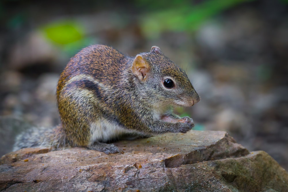 Squirrels hide nuts to prepare for the cold winters with little food.