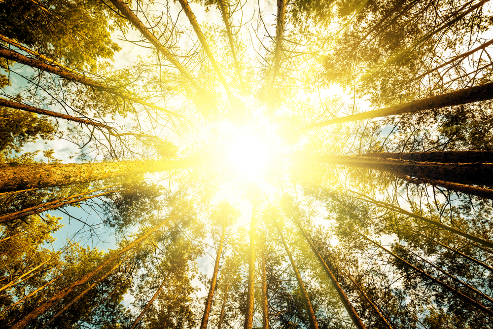 Radiation from the Sun is called sunlight.