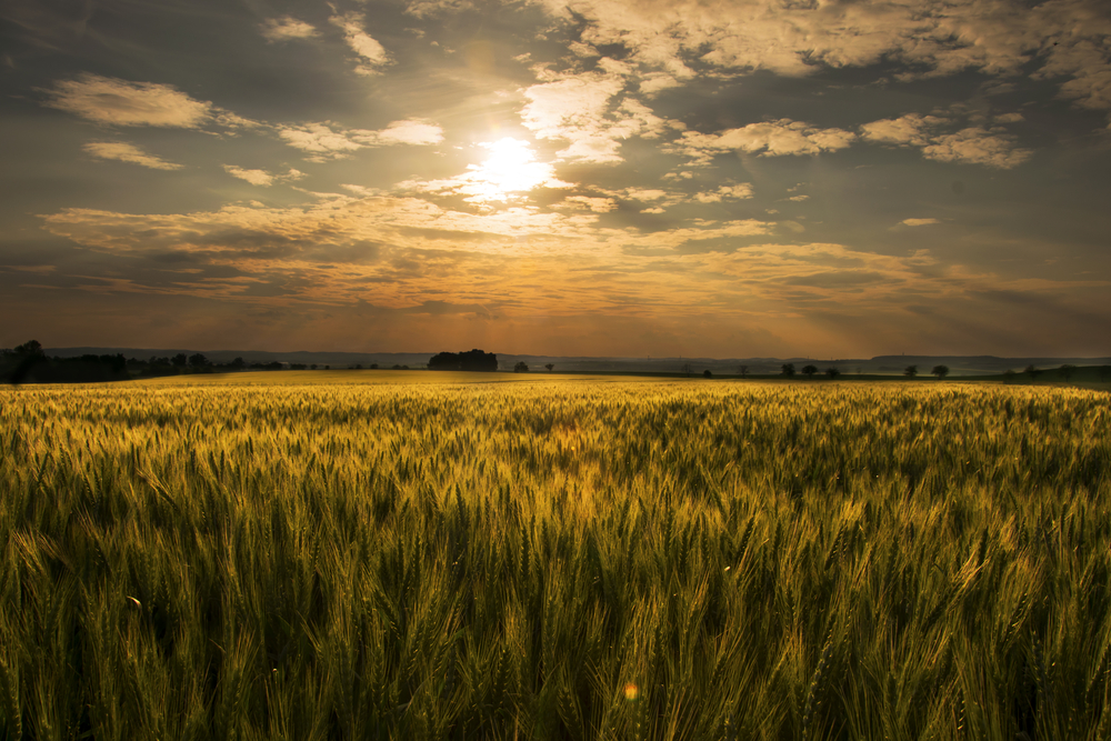 Most food chains start with energy from the Sun.
