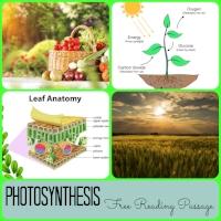 Photosynthesis Reading Passage Pin.jpg