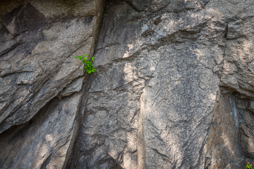The roots of plants can weather rocks.