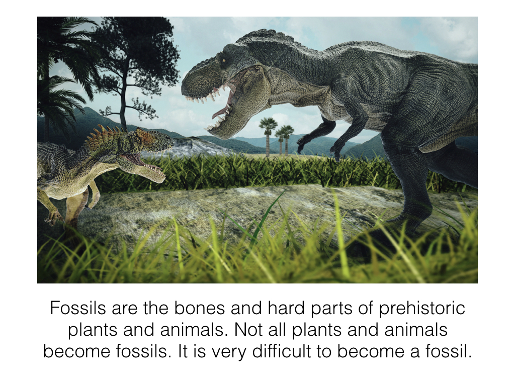 How a Fossil is Made Slideshow.002.jpeg