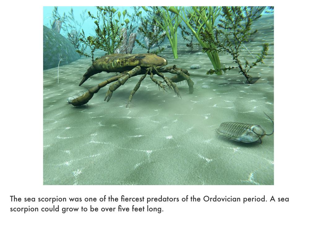 Ordovician Period.021.jpeg